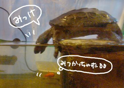 070117sakana1.jpg