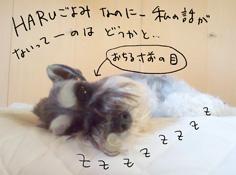 haru20110912.jpg