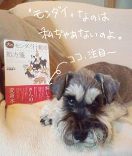 haru20111207.jpg