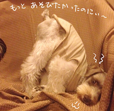 harubonn20141218_3.jpg