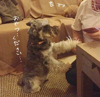 harubonn20141218_4.jpg